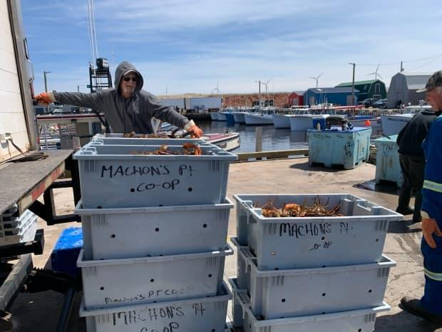 Machon's Point Co-Op loads some of the fresh live lobsters it has just purchased onto its refrigerated truck on the wharf. The co-op is one of more than a dozen buyers on the wharf at North Lake.