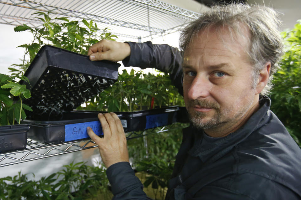 Chip Baker shows a flat of plants that have begun to root at the Baker's marijuana nursery at Baker's Medical, Wednesday, Feb. 26, 2020, in Oklahoma City. When voters in conservative Oklahoma approved medical marijuana in 2018, many thought the rollout would be ploddingly slow and burdened with bureaucracy. Instead, business is booming so much cannabis industry workers and entrepreneurs are moving to Oklahoma from states with more well-established pot cultures, like California, Colorado and Oregon. (AP Photo/Sue Ogrocki)