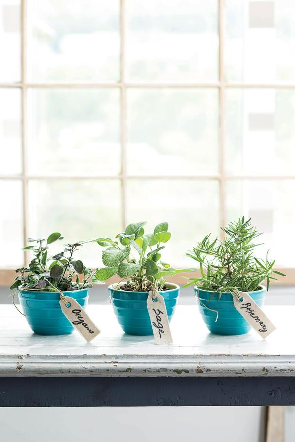 """<p>Herbs are another great option for newbies. Try these three favorites: <a rel=""""nofollow"""" href=""""http://www.southernliving.com/home-garden/gardens/growing-herbs?iid=sr-link5"""">rosemary, oregano, and sage</a>. Pick a sunny spot in your kitchen window, and provide basic care to keep these perennials alive. Choose a pot with good drainage, and make sure not to overwater the seeds. Invite friends over for dinner, and impress them with the fresh herbs seasoning your home-cooked dishes.</p>"""