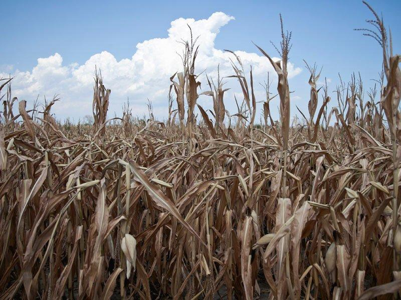 Drought spreads in US Midwest