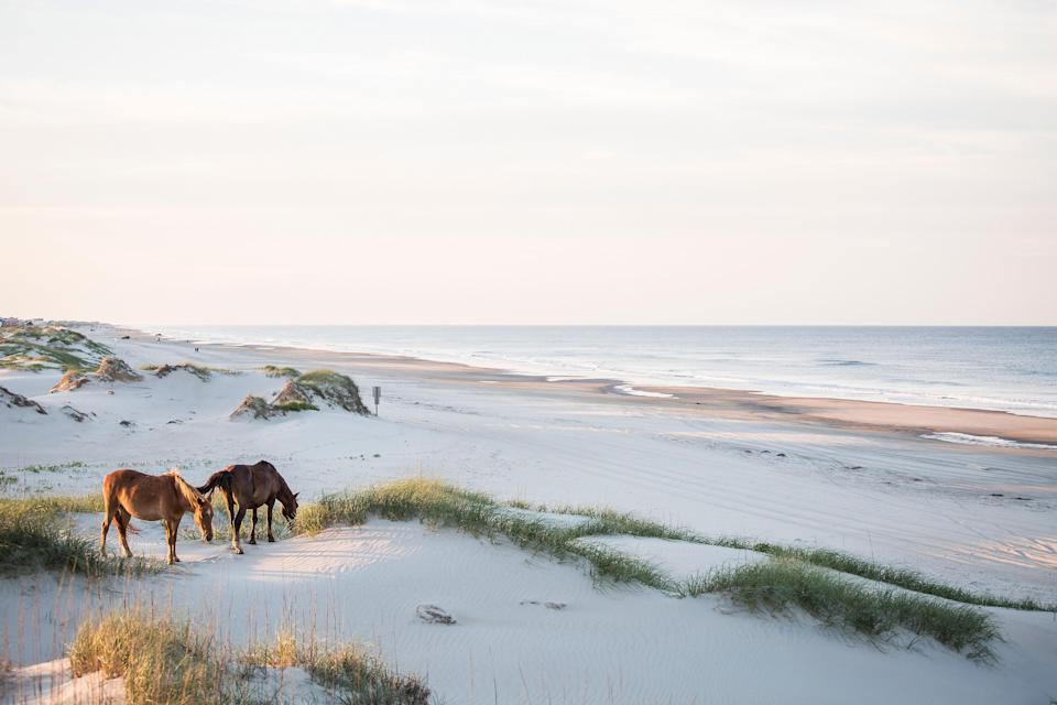 <p><strong>Best thing to do in North Carolina:</strong> Head to the Outer Banks</p> <p>North Carolina's Outer Banks (or OBX, according to many a bumper sticker) are some of the most gorgeous beaches in the U.S. And there's still plenty to do if you take a break from sunbathing, including the North Carolina Aquarium in Roanoke, the memorial commemorating the Wright Brothers' historic first flight in Kitty Hawk, and a series of iconic lighthouses, including the famous barbershop pole-style swirled one at Cape Hatteras. End the day with fried oysters in Nags Head—this is the South, after all.</p>