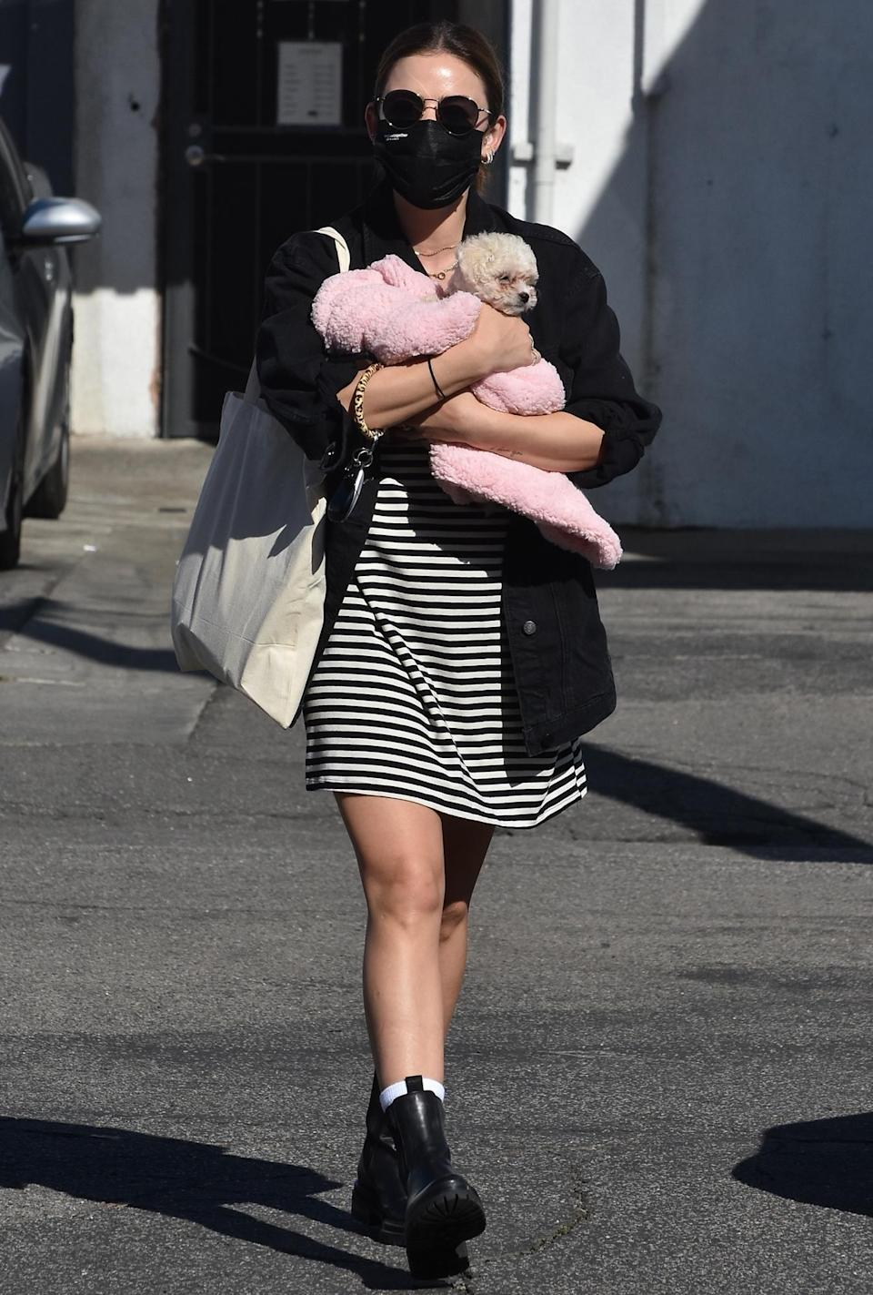 <p>Lucy Hale picked up her new puppy in Studio City, California.</p>