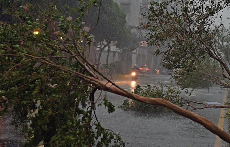 Damaged trees as typhoon Soudelor hits Taipei on August 8, 2015 (AFP Photo/Sam Yeh)