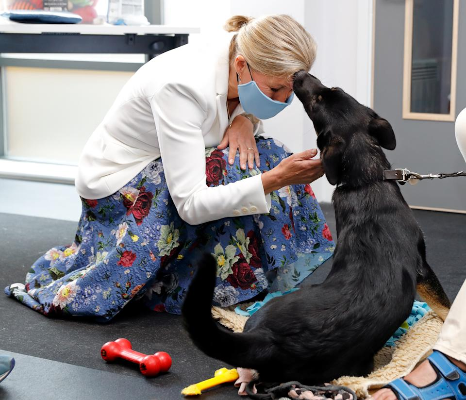 BRISTOL, UNITED KINGDOM - JULY 07: (EMBARGOED FOR PUBLICATION IN UK NEWSPAPERS UNTIL 24 HOURS AFTER CREATE DATE AND TIME) Sophie, Countess of Wessex (wearing a face mask) meets a guide dog puppy in training as she visits the Guide Dogs for the Blind Association to open their new south west regional centre and celebrate the charity's 90th anniversary on July 7, 2021 in Bristol, England. During the visit Princess Alexandra, who has been patron the Guide Dogs for the Blind Association since 1954, formally handed over the patronage to Sophie, Countess of Wessex. (Photo by Max Mumby/Indigo/Getty Images)