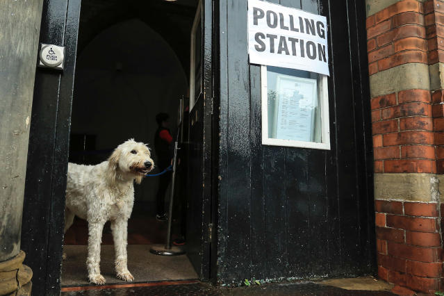 <p>A dog is pictured at a polling station in Howden, northeast England on June 8, 2017, as Britain holds a general election.<br> (Photo: LINDSEY PARNABY/AFP/Getty Images) </p>