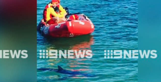 Swimmers warned as shark spotted at Melbourne beach