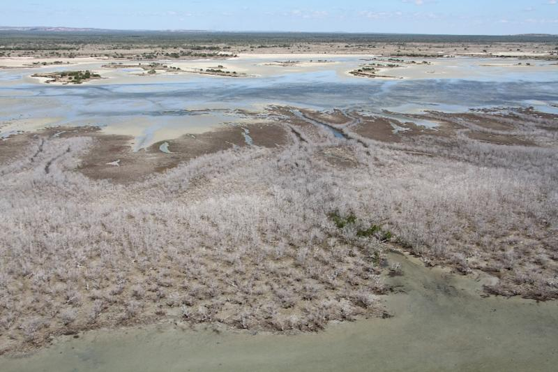 A vast area of dead mangroves pictured in the Gulf of Carpentaria, in Australia's remote north (AFP Photo/)