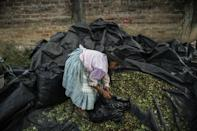 """In 2019, before the global pandemic, one """"arroba"""" (11.5 kilograms) of coca leaf sold for up to 200 soles, or about $60. It is now five to six times less (AFP/ERNESTO BENAVIDES)"""