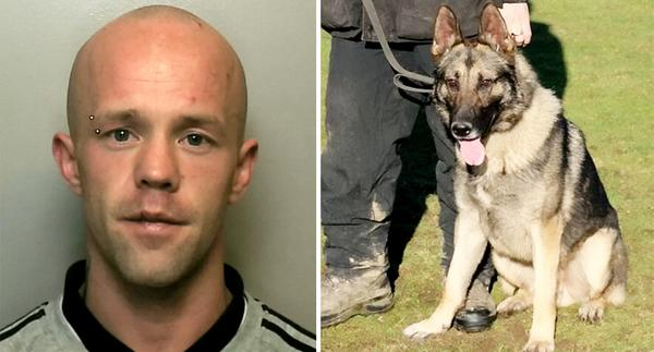 Vicious: Daniel O'Sullivan, 29, stabbed Police Dog Audi after officers tried to arrest him for being drunk and making threats in the street