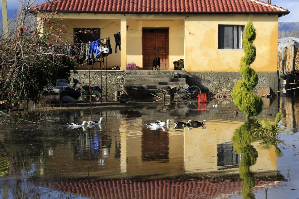 Ducks pass a flooded yard as a dog watches, after heavy rainfalls in Obot village, about 100 kilometres (60 miles) northwest of Tirana, Albania, Monday, Jan. 11, 2021. Heavy rainfall and snow during the last days has flooded many areas in the country, authorities said on Monday. Thousands of hectares (acres) have been flooded in western Albania where authorities have evacuated scores of them. (AP Photo/Hektor Pustina)