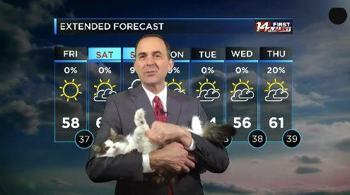 Cat Interrupts Meteorologist Working From Home And Wins A New Job