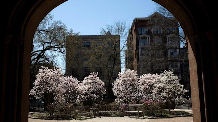 Trees bloom on the campus of Yale University in New Haven, Connecticut. The Department of Justice, headed by Attorney General Bill Barr, has sued Yale for allegedly discriminating against white and Asian applicants. (Photo by Christopher Capozziello/Getty Images)