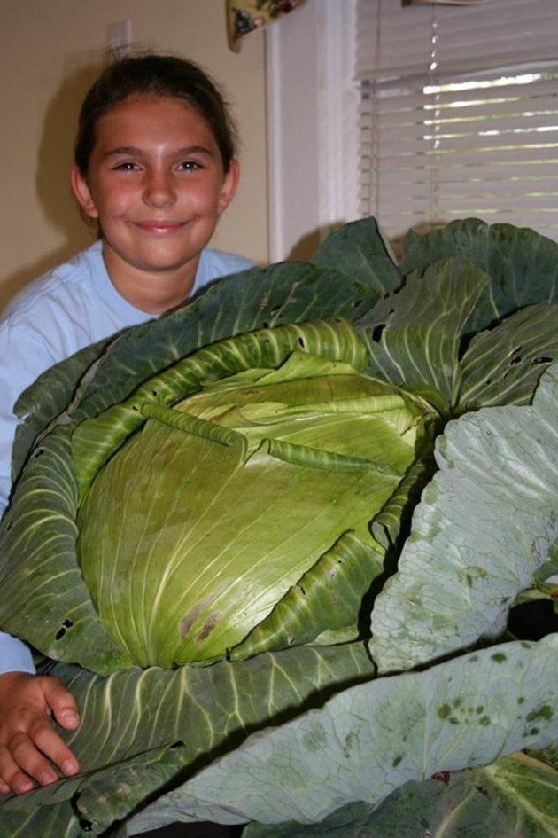 Katie and her giant cabbage.
