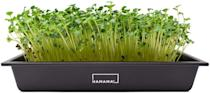 <p>Grow fresh microgreens for smoothies, salads, and more with the <span>Hamama Home Microgreens Growing Kit</span> ($40). It's super easy to set up and use in all your homemade meals. </p>