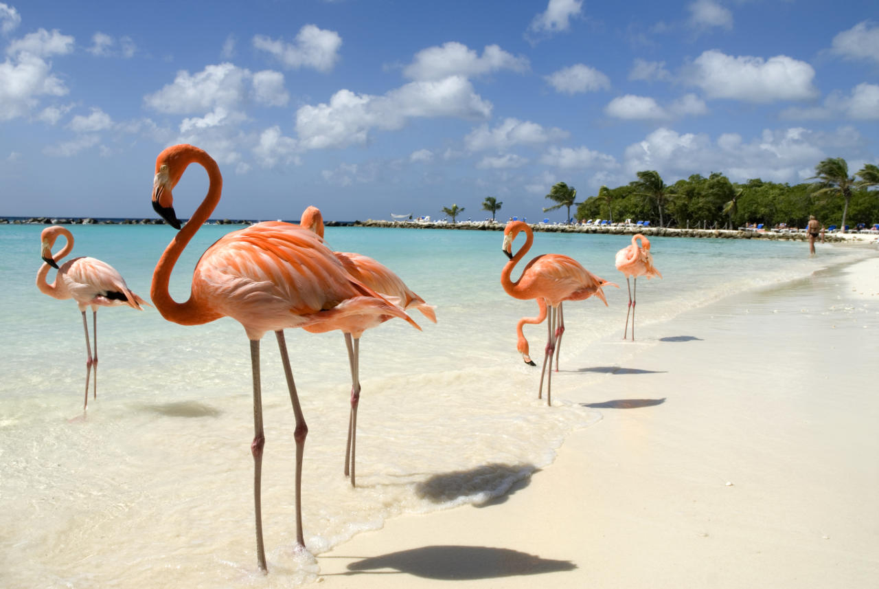 """<p>While many tropical islands are at the mercy of the weather, Aruba is special in that it's out of the hurricane zone altogether — so a sunny honeymoon is almost guaranteed, no matter what time of year you get married. Stay at the <a rel=""""nofollow"""" href=""""https://www.tripadvisor.com/Hotel_Review-g147249-d149892-Reviews-Hyatt_Regency_Aruba_Resort_and_Casino-Palm_Eagle_Beach_Aruba.html"""">Hyatt Regency Aruba Resort Spa and Casino</a>, where you can relax in a <a rel=""""nofollow"""" href=""""https://aruba.regency.hyatt.com/en/hotel/activities.html"""">reserved private hut</a> on the white sand beach. You're also close to the main shopping district if you want a little more action.</p>"""