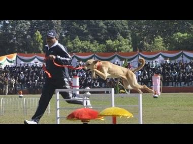 In a first, Uttarakhand Police train street dogs to recruit them in dog squad; strays outperform expensive breeds