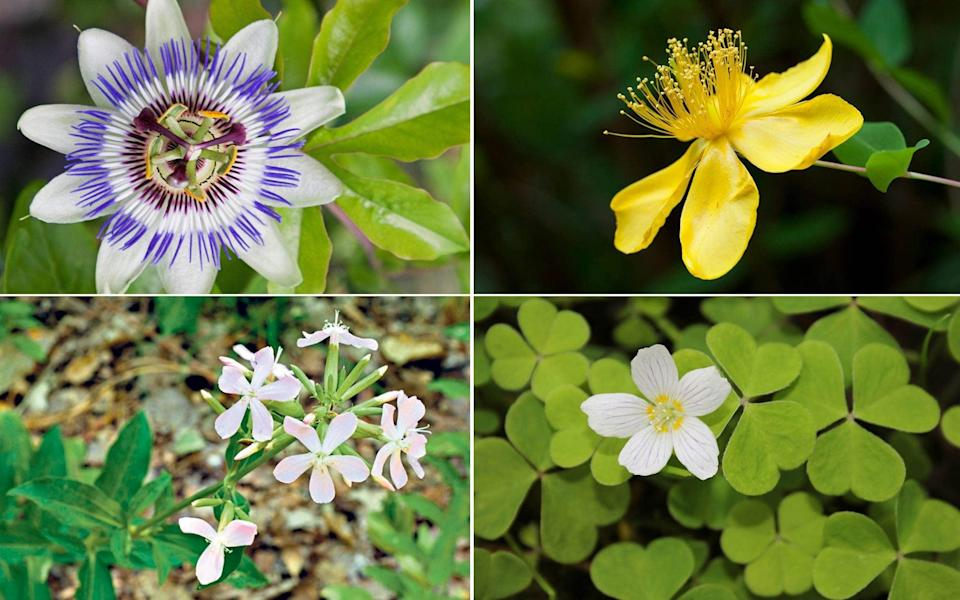20 plants that should come with a health warning - Gap Photos / Alamy Images