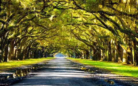 Oak Alley Plantation - Credit: iStock