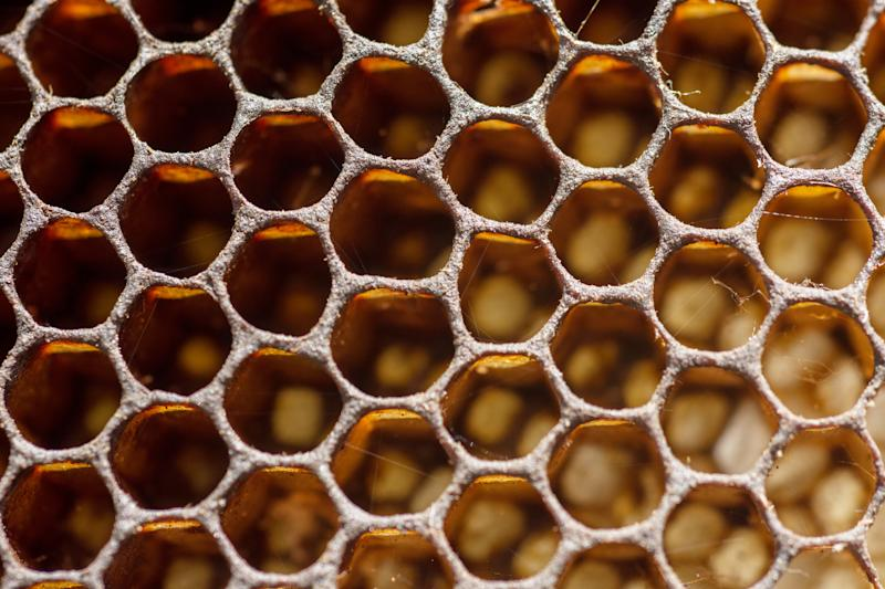 Sufferers of trypophobia have a fear of small holes in a regular pattern [Photo: Getty]