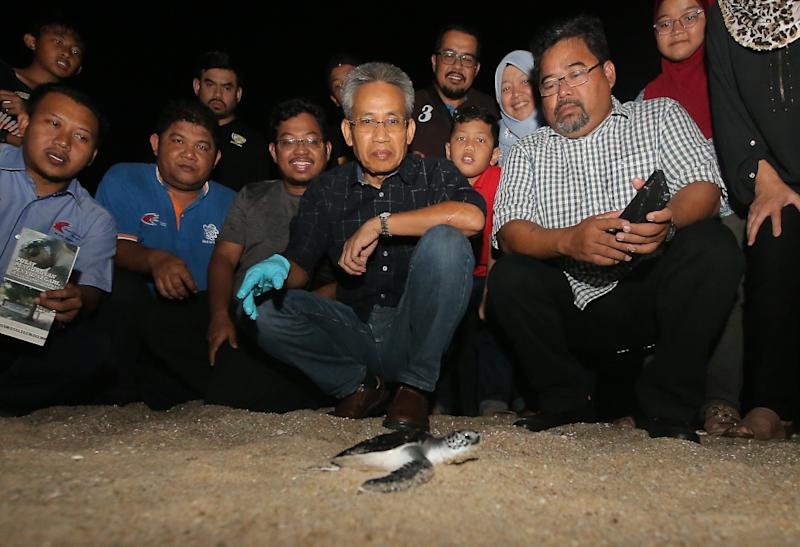 Perak Fisheries Department director Zaki Mokri (forefront in black shirt) said the department has been releasing between 2,500 and 3,500 turtle hatchlings annually into the sea since 1990. — Picture by Farhan Najib