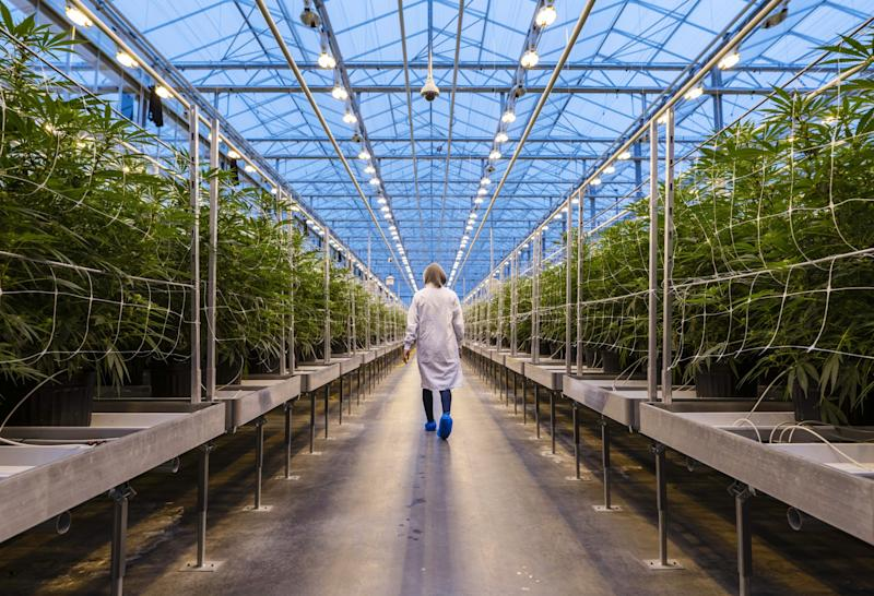 BlackRock Funds Invest in Pot Stock as Legalized Weed Gains