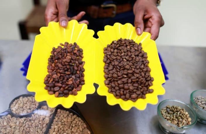 Partly and fully roasted coffee beans are displayed at a quality control laboratory in Kaldi Africa roastery in Lagos