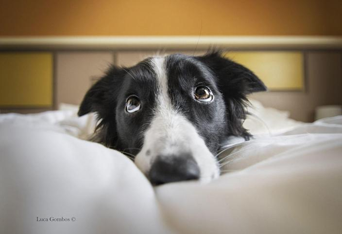 <p>17-year-old Luca Gombos took this image of Lia, a Border Collie, during a family holiday. </p>