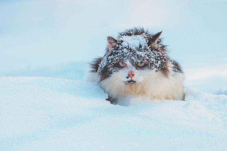 <p>Okay, yes, this cat is probably not too thrilled to be covered in wet and cold snow, but still—you can't deny that he looks adorable. Plus, he has a nice, thick coat that is definitely keeping him at least a little warm.</p>