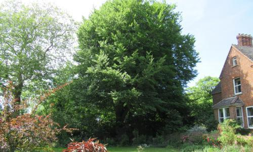 Tree of the week: 'I have been friends with this beech tree all my life'