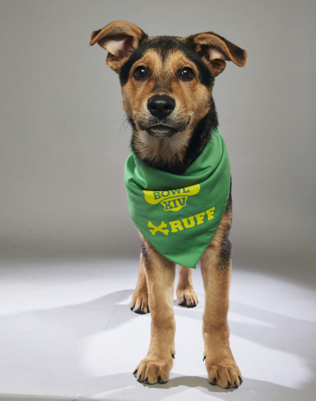 <p>Team: Ruff<br> From: Humane Society of Greater Nashua<br> (Photo: Animal Planet) </p>