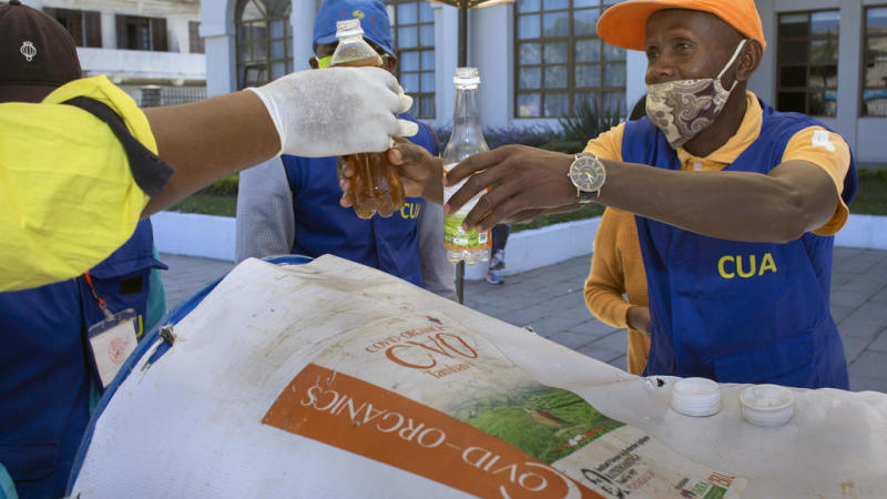 Profiting from Madagascar's herbal 'cure' for Covid: the story behind artemisia