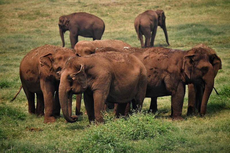 Elephants rescued from tourism and logging gather at the Elephant Nature Park in the northern Thai province of Chiang Mai.