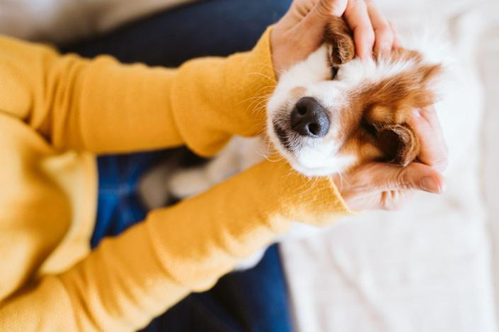 young woman comforting her dog with entropion by rubbing eyes