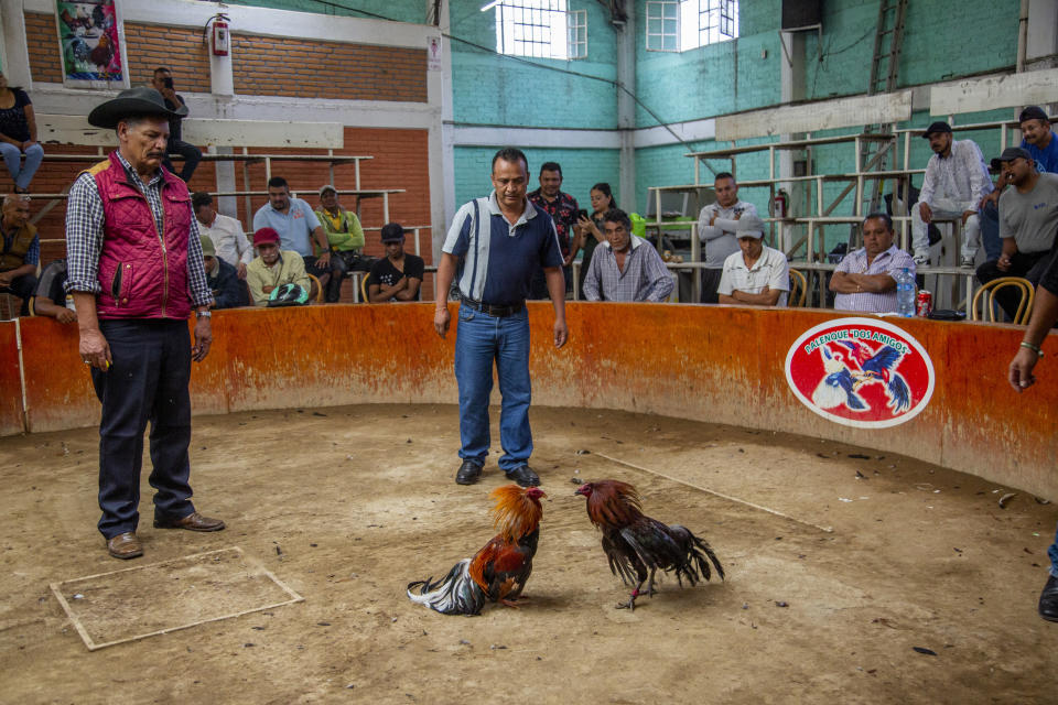 16 June 2019, Mexico, Chimalhuacan: Men follow a cockfight in a small arena. Animals are carefully raised in Mexico for such cock fights. They are then presented at regional fairs and folk festivals. The Mexican government describes the fighting as a tradition that has been cultivated in the country since the 16th century and praises it as an important part of Mexican culture. Photo: Jair Cabrera Torres/dpa (Photo by Jair Cabrera Torres/picture alliance via Getty Images)