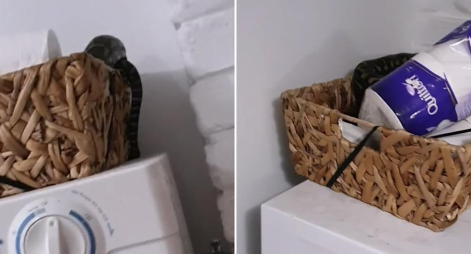 A carpet python is seen inside a toilet paper basket in a Sunshine Coast home.