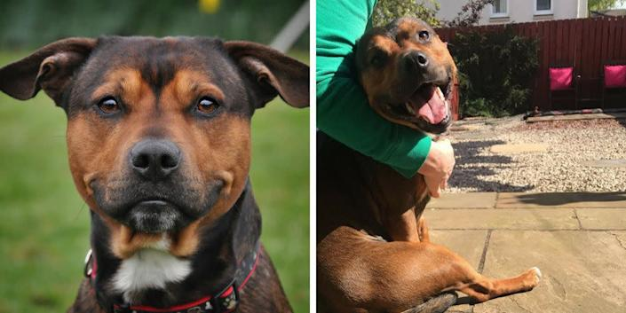 """""""This is Kai, who was brought into the <a href=""""https://www.edch.org.uk/"""" rel=""""nofollow noopener"""" target=""""_blank"""" data-ylk=""""slk:Edinburgh Dog and Cat Home"""" class=""""link rapid-noclick-resp"""">Edinburgh Dog and Cat Home</a> when his owners could no longer cope with his care &ndash; he had reportedly been passed from home to home and had never known a stable, loving forever home. Kai was admitted to us on April 4 and was just taken home to his forever home last weekend. The photo on the left was when he was with us and the photo on the right was sent to us by his new owners, an hour after being re-homed."""" -- <i>Julie Thomson, communications manager at the Edinburgh Dog and Cat Home</i>"""