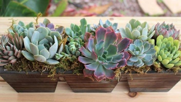 This succulent arrangement makes for a no-brainer gift idea for both a loved one and yourself.