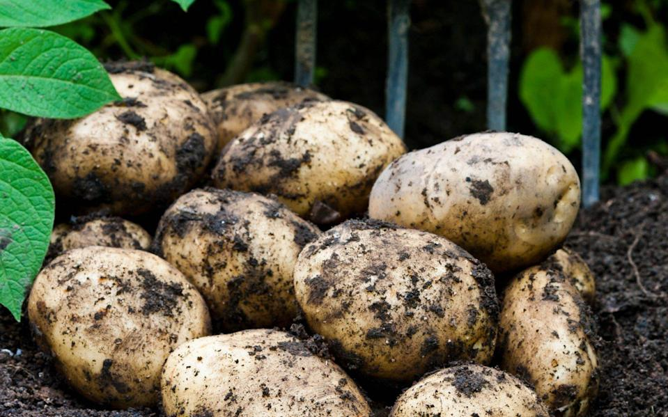 Sales of unwashed potatoes in supermarkets and grocery stores was common practice until the 1970s - Features Scans