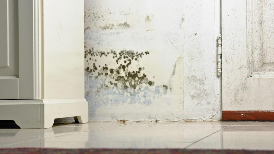 Mold or Mould Stains on Damp Wall and Door behind Cabinet due to condensation caused by lack of ventilation.