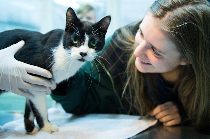 Elena Hanke poses for a photo with her cat Miko at the animal refuge centre in Berlin on December 26, 2105. The cat has being found again after it went missing in 2008. (AFP Photo/Bernd Von Jutrczenka)