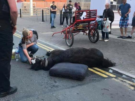 Two arrested after horse collapses in Cardiff as Easter heatwave grips city