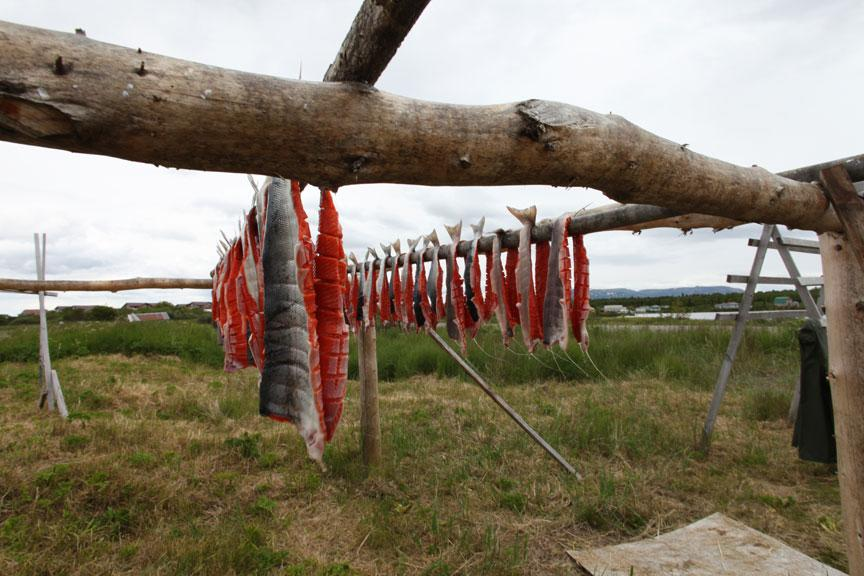 Salmon being dried on the shores of Alaska's Lake Iliamna just as they have been for centuries.