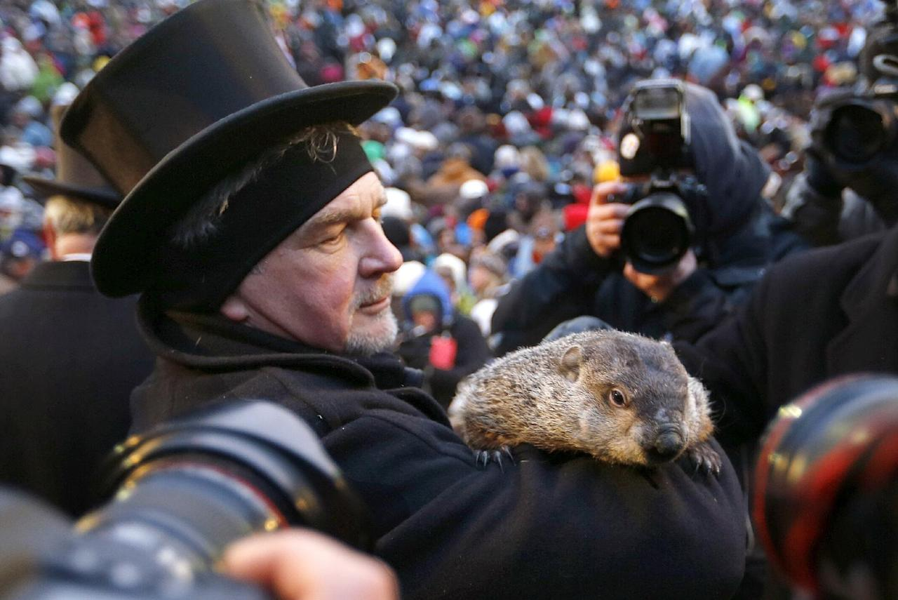 Groundhog Club Co-handler John Griffiths holds the weather predicting groundhog, Punxsutawney Phil, as he is surrounded by photographers after the club said Phil did not see his shadow and there will be an early spring on Groundhog Day, Saturday, Feb. 2, 2013 in Punxsutawney, Pa. (AP Photo/Keith Srakocic)