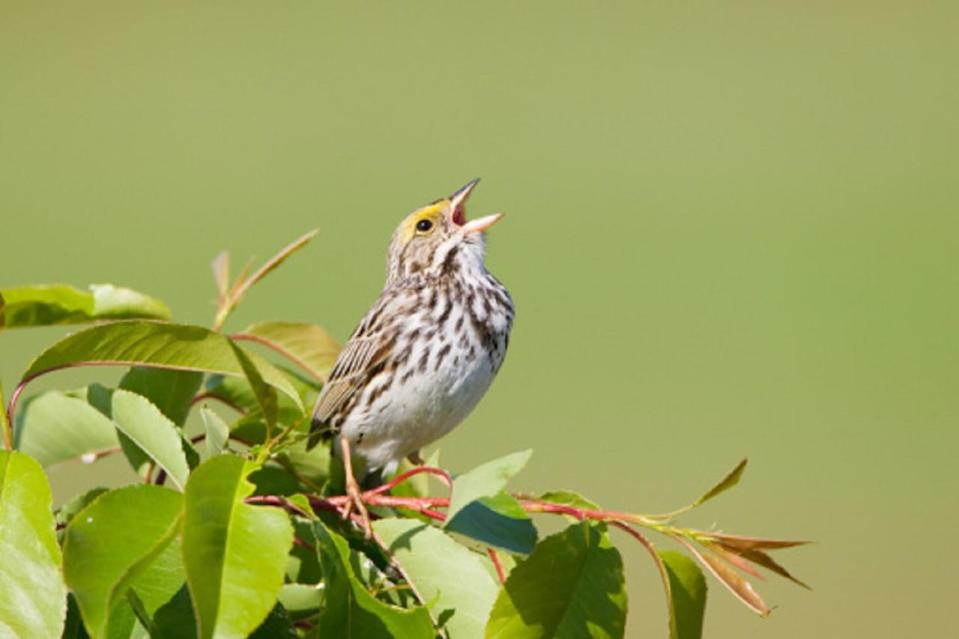 New study suggests birds increase life satisfaction
