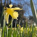 """<p>Head to Brodie Castle in Scotland and you'll discover over 400 varieties of daffodil. A slice of Scottish history, it's the perfect picnic spot this summer. Make sure you book your ticket...</p><p><a class=""""link rapid-noclick-resp"""" href=""""https://go.redirectingat.com?id=127X1599956&url=https%3A%2F%2Fwww.nts.org.uk%2Fvisit%2Fplaces%2Fbrodie-castle&sref=https%3A%2F%2Fwww.housebeautiful.com%2Fuk%2Fgarden%2Fplants%2Fg36337666%2Fflower-field%2F"""" rel=""""nofollow noopener"""" target=""""_blank"""" data-ylk=""""slk:MORE INFO"""">MORE INFO</a> </p><p><a href=""""https://www.instagram.com/p/B91oTbsHvwK/"""" rel=""""nofollow noopener"""" target=""""_blank"""" data-ylk=""""slk:See the original post on Instagram"""" class=""""link rapid-noclick-resp"""">See the original post on Instagram</a></p>"""