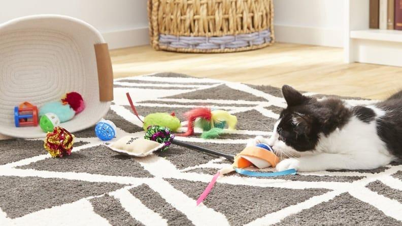 This cat toy variety pack is sure to keep your feline foster entertained.