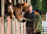 "<p>On a recent visit to the Moroccan Royal Federation of Equestrian Sports in Rabat, Meghan and Harry took time to pet the horses in the stable. </p><p><strong>More: </strong><a href=""https://www.townandcountrymag.com/society/tradition/g26364847/prince-harry-and-meghan-markle-morocco-2019-visit-photos/"" rel=""nofollow noopener"" target=""_blank"" data-ylk=""slk:See All The Best Photos From Prince Harry and Meghan Markle's Official Visit to Morocco"" class=""link rapid-noclick-resp"">See All The Best Photos From Prince Harry and Meghan Markle's Official Visit to Morocco</a></p>"
