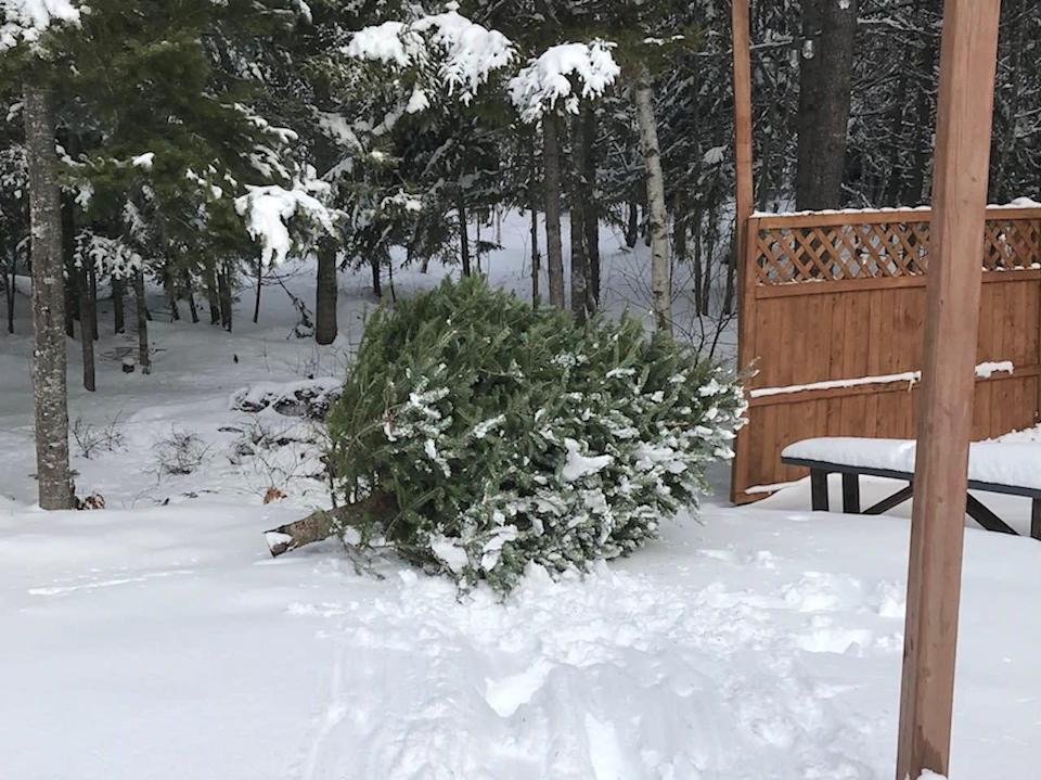 Why keeping your Christmas tree is a good idea