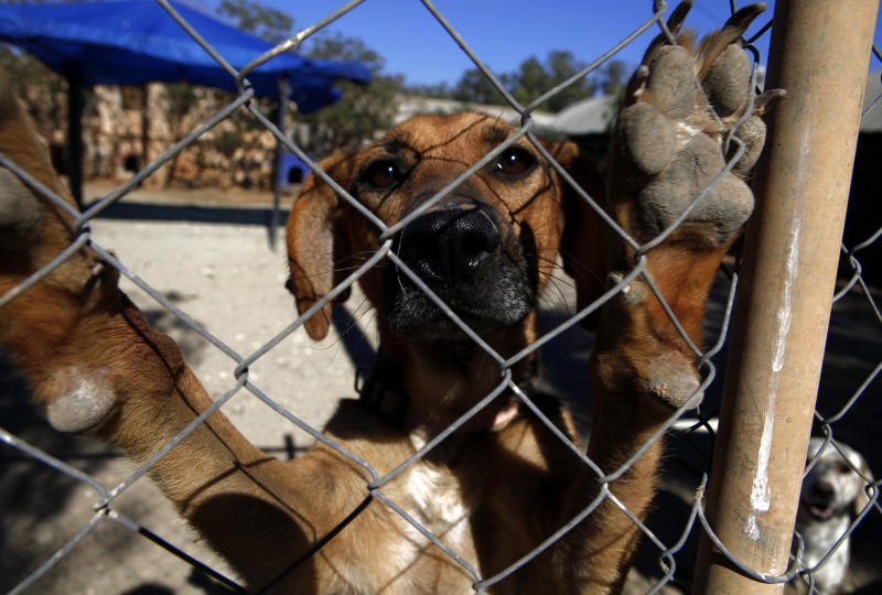 Cyprus: Spike in stray dogs since onset of crisis