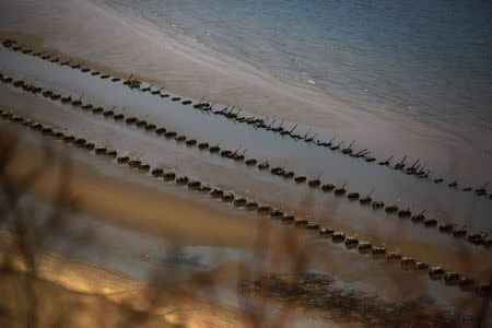 Anti-landing spikes placed by South Korean military are seen during low tide on the beach on the island of Baengnyeong which lies on the South Korean side of the Northern Limit Line (NLL) in the Yellow Sea in this April 13, 2014 file photograph. REUTERS/Damir Sagolj/Files